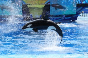 Sea World in Orlando, FL